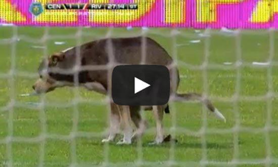 นักบอลอึ้ง! หมาอึในสนามลีกอาร์เจนติน่าระหว่างแข่ง