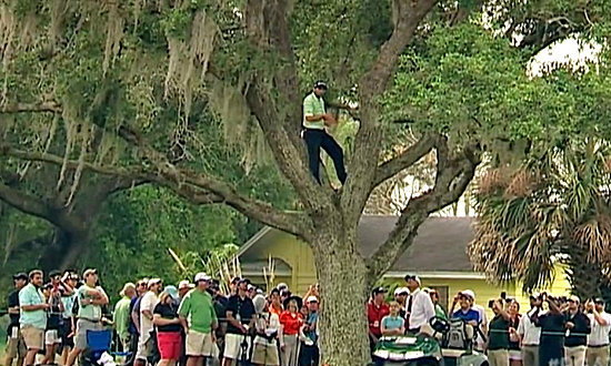 """สุดยอดของแท้ """"การ์เซีย"""" ปีนต้นไม้ตีช็อต 2 งัดย้อนหลังกลับมาลงแฟร์เวย์ (ชมคลิป)"""