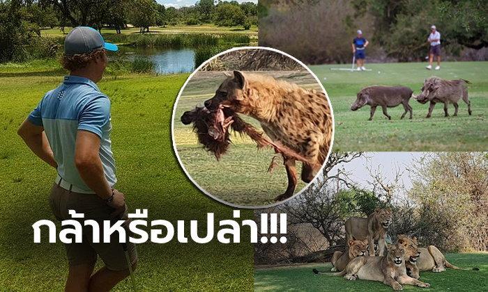 """แบบนี้ก็มีด้วย! """"สนามกอล์ฟสุดแปลก"""" หนึ่งเดียวในโลกที่เต็มไปด้วยสิงสาราสัตว์ (ภาพ)"""
