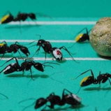 Ant World Cup 2010_6