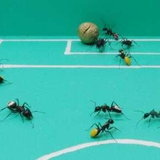 Ant World Cup 2010_2