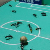 Ant World Cup 2010_3