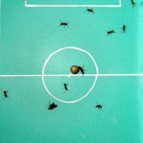 Ant World Cup 2010_7
