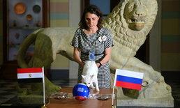 """เลือกทีมไหน! """"อคิลลีส"""" แมวจอมแม่นทำนายผลคู่ รัสเซีย VS อียิปต์"""