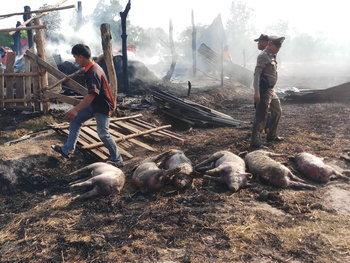 ไฟลามทุ่งเผาฟาร์มหมู 12 ตัว คากองเพลิง เสียหายกว่า 6 แสนบาท