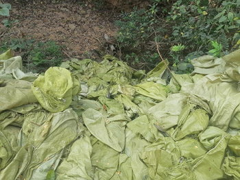 คนมักง่ายทิ้งขยะพม่าในไทยหวั่นโควิด-19 ระบาด