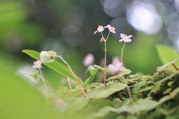 ทุ่งโนนสน ดอกไม้ป่าที่สวยงามและธรรมชาติอันสมบูรณ์