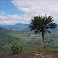 ป่าปรงพันปีชนิดเดียวในไทย