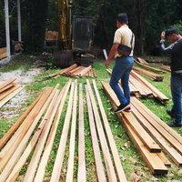 มอดไม้ลอบตัดไม้ในเขตป่าสงวนฯ