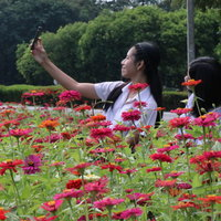 สวนดอกไม้