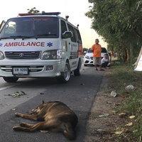 หมาวิ่งตัดหน้ารถ