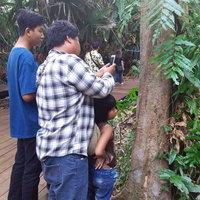 ส่องหาเลขต้นมะเดื่อยักษ์