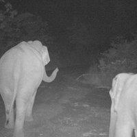 กล้องดักถ่ายสัตว์ป่าถูกทำลาย พบเป็นฝีมือช้าง