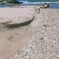 คลื่นกัดเซาะหาดหัวไทรหนัก-ก้อนน้ำมันเกลื่อน