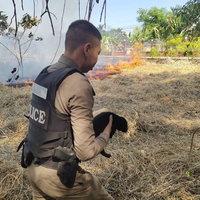 ตำรวจช่วยลูกหมาจรจัดจากกองไฟ
