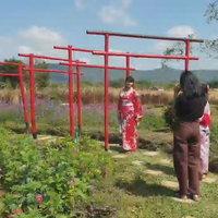 สวนดอกไม้ผีเสื้อวังน้ำเขียวจากฝีมือเกษตรกร
