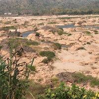 น้ำโขงลดต่ำพันโขดแสน ไคร้น้ำแห้งเดินได้เกือบถึงฝั่งลาว