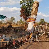 ชาวบ้านแห่ขอเลขเด็ด ตอไม้ล้มตายกลับฟื้นยืนต้น