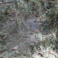 ทหารทำลายระเบิดอากาศ MK 82 สมัยโจรจีนคอมมิวนิสต์มาลายา