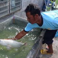 ชาวประมงพบปลาเก๋าเผือกครั้งแรกในชีวิต นำมาเลี้ยงให้ลูกหลานได้ชม