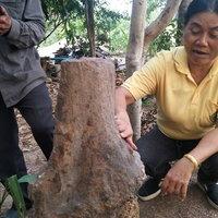 ขุดพบต้นมะยมกลายเป็นหิน เชื่อโผล่ขึ้นมาให้โชค