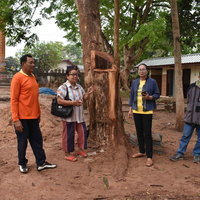 มอดไม้เหิมตัดต้นพะยูง 100 ปี ในวัดกลางหมู่บ้านหนีลอยนวล
