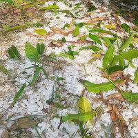 พายุลูกเห็บเท่าไข่นกกระทา ถล่มหมู่บ้านขาวโพลนเหมือนหิมะ