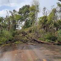 พายุถล่มพัดต้นไม้ทับยายสาหัส หลานสาววัย 16 ดับ