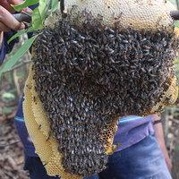 รังผึ้งมิ้ม! วัยรุ่นสุรินทร์ออกหารังผึ้งขายออนไลน์รายได้ดี