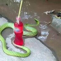 ชมชัดๆ งูเขียวร่ายรำเล่นน้ำ เชื่อเป็นลูกหลานพญานาค