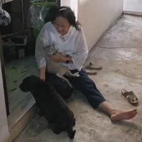 น่ารัก! เพื่อนคู่ซี้ต่างสายพันธุ์ สุนัขใจดีนอนให้แมวกินนมเหมือนกับเป็นลูก
