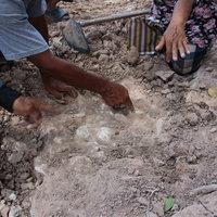 ฮือฮาขุดพบกระดูกสัตว์โบราณ เชื่อบันดาลโชคแห่ขอหวยคึกคัก