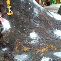 ส่องเลขต้นตะเคียนปราจีนบุรี หลังให้หวยแม่นงวดก่อนนี้