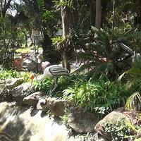 สวนสัตว์สงขลา เนรมิตป่าอเมซอนแลนด์มาร์คใหม่
