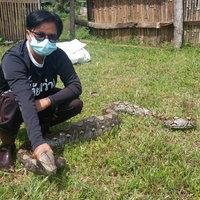 ตัวใหญ่จัด! งูเหลือมยักษ์บุกเรือนจำ เลื้อยเขมือบห่าน