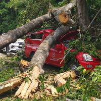 ระทึกสิบกะโหลก! ต้นสบันงายักษ์อายุกว่า 100 ปี ล้มทับรถยนต์บนวัดดอยสุเทพ