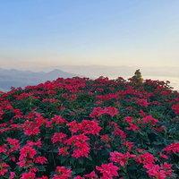 หนาวนี้ที่ห้วยน้ำดัง ชมดอกไม้สวยงาม สัมผัสทะเลหมอกอลังการ