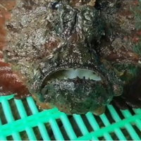 ตะมุตะมิ! ปลาประหลาดพบที่เกาะลันตา
