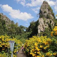 ชมความงามดอกทองอุไร ในเขาหินปูน