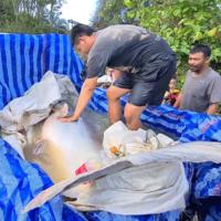 ใหญ่มาก! แทบอึ้งจับปลาบึกยักษ์น้ำหนัก 150 กก. ขายได้หลายหมื่น