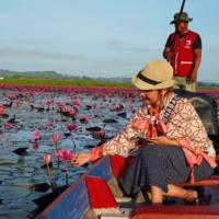 ล่องเรือชมดอกบัวแดงบานสะพรั่ง คุ้งน้ำทะเลน้อย