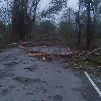 มหันตภัยพายุถล่มเมือง! พายุหมุนทำต้นไม้ 300 ปี ล้มทับศาลาวัดอายุ 600 ปี พังทั้งวัด