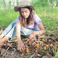 วิถีชาวบ้าน ปลูกต้นยางนา เห็ดระโงกผุดขึ้นใต้ต้น เก็บขายกิโลกรัมละ 300 บาท