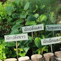 เกษตรเร่งรัดโครงการ 1 ตำบล 1 กลุ่มเกษตรทฤษฎีใหม่ ดันให้เสร็จตามเป้า