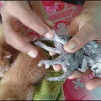 ลูกแมวแฝด 8 ขา 2หาง ตัวแม่ให้โชคมาแล้วหลายงวด