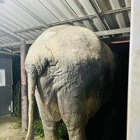 ช้างป่าโชว์งัดงา ก่อนบุกบ้านขโมยอาหารแมว
