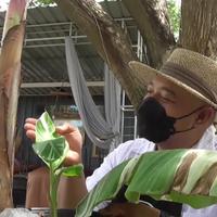 โควิดทำพิษ เจ้าของร้านอาหารดังผันตัวขายกล้วยด่าง สร้างกำไรถึงเดือนละกว่า 200,000