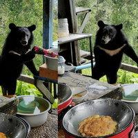 """""""น้องหมีควาย"""" อยากกินไข่เจียว ลงมาขอหน่อย"""