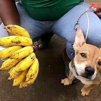 หมาชอบกินกล้วย เผลอแป๊ปเดียวหมดหวี