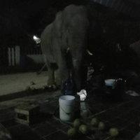 ช้างป่าหิวโซ แบ่งทีมยกพวกบุก